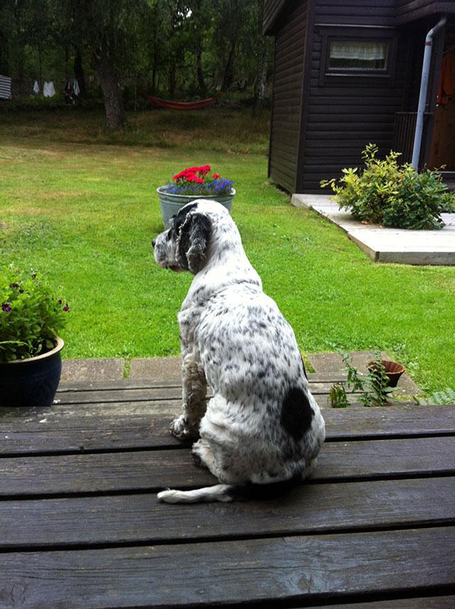 hund-på-trall